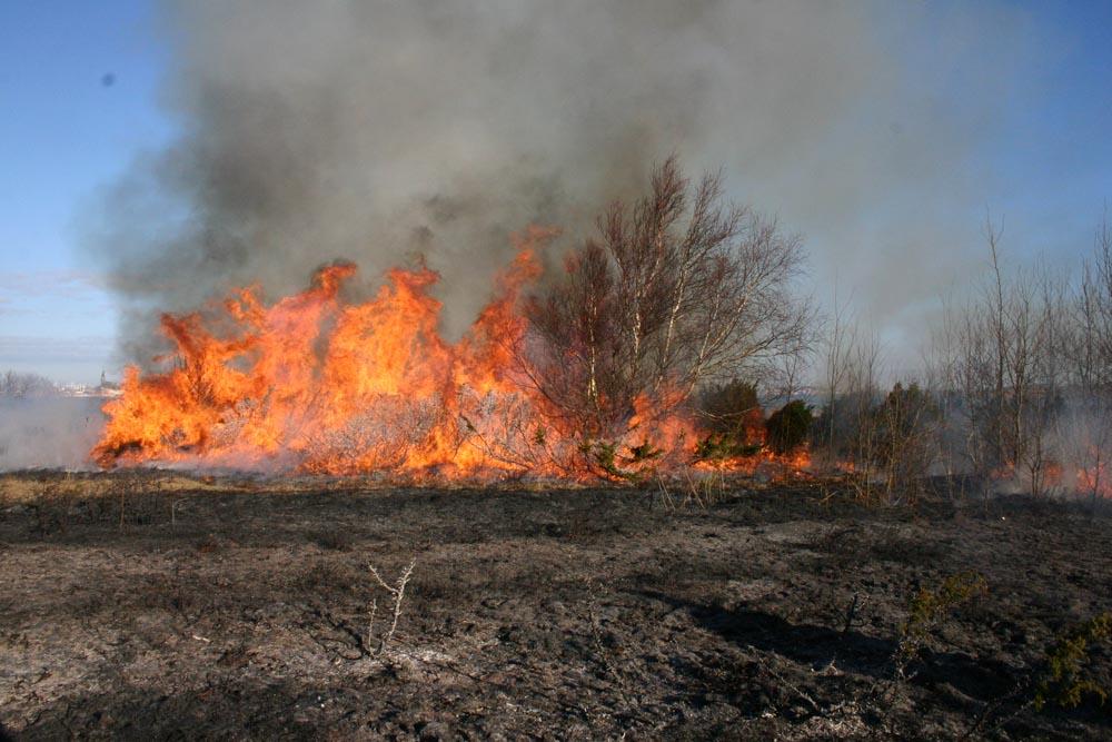 IMG_6913 elden har tagit sig